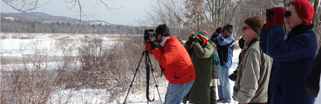 Bird Watching At The Bashakill In Winter